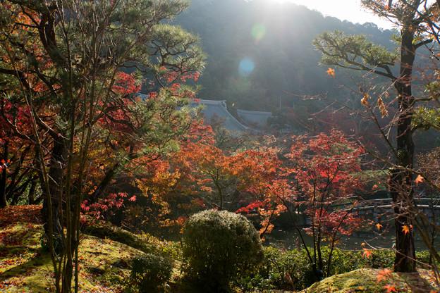 35京都の紅葉【永観堂:放正池付近】3