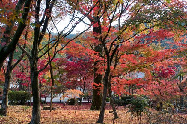 27京都の紅葉【永観堂:寿橋西の庭付近】3