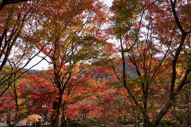 28京都の紅葉【永観堂:寿橋西の庭付近】4