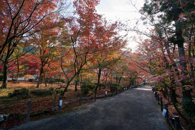 54京都の紅葉【永観堂:図書館付近】1