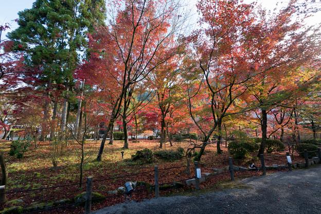 55京都の紅葉【永観堂:図書館付近】2