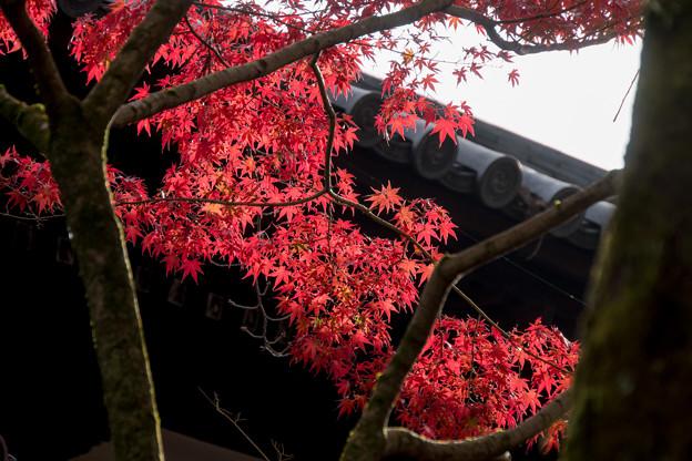 50京都の紅葉【永観堂:画仙堂付近】7