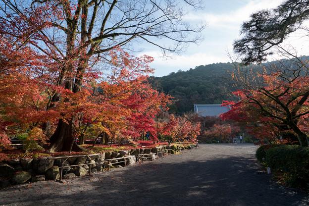 51京都の紅葉【永観堂:遊歩道付近】1