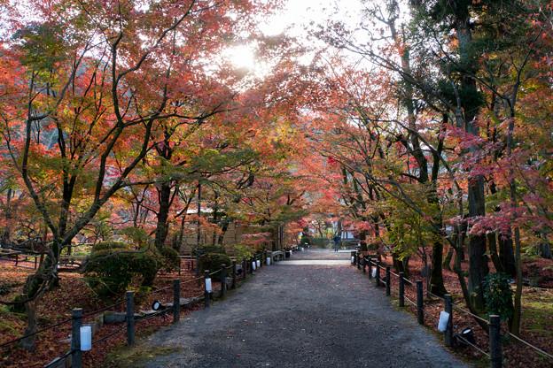 52京都の紅葉【永観堂:遊歩道付近】2
