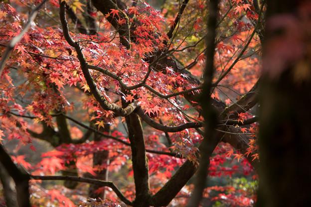 56京都の紅葉【永観堂:図書館付近】3