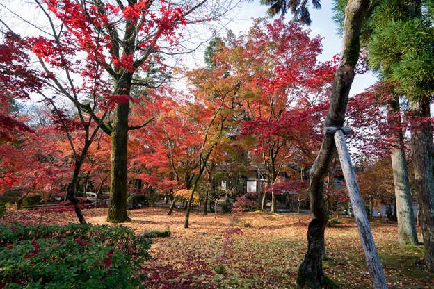 59京都の紅葉【永観堂:図書館付近】6