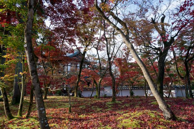60京都の紅葉【永観堂:図書館付近】7