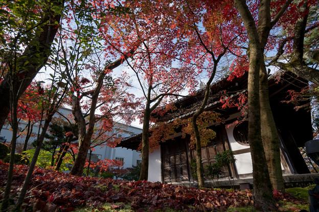 48京都の紅葉【永観堂:画仙堂付近】5