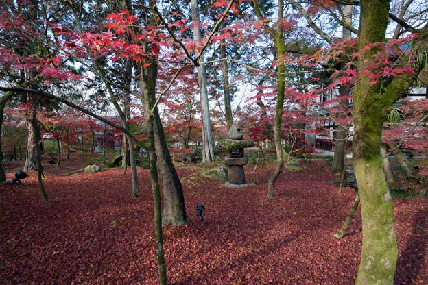 61京都の紅葉【永観堂:図書館付近】8