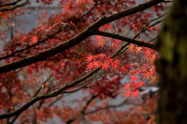 63京都の紅葉【永観堂:紅葉のアップ】2