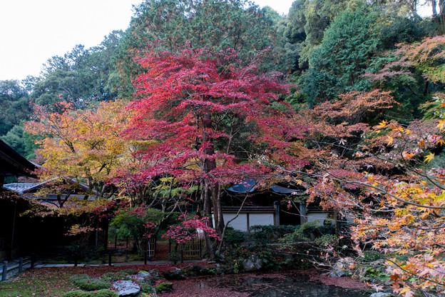 07京都の紅葉【南禅寺:南禅院】2