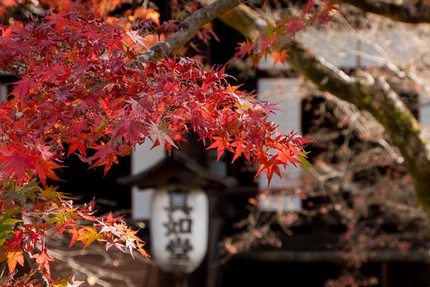17京都の紅葉【真正極楽寺 (真如堂)】8