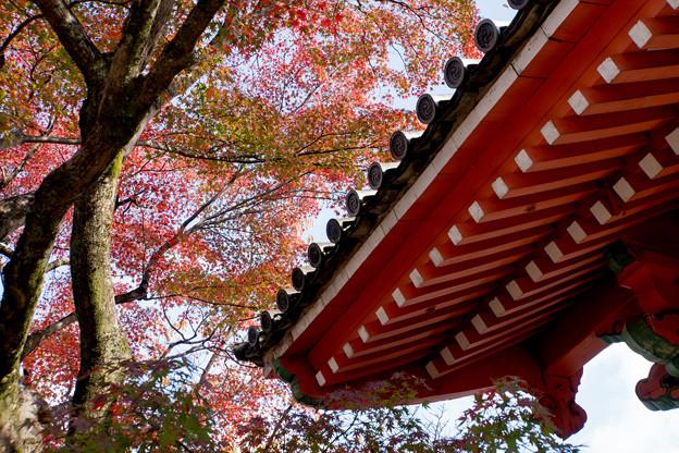 12京都の紅葉【真正極楽寺 (真如堂)】3