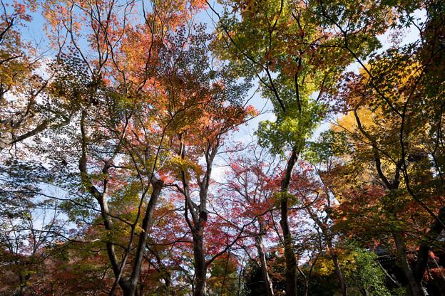 14京都の紅葉【真正極楽寺 (真如堂)】5