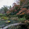 Photos: 24京都の紅葉【青蓮院門跡】3