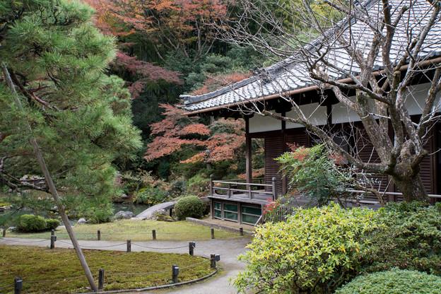 25京都の紅葉【青蓮院門跡】4