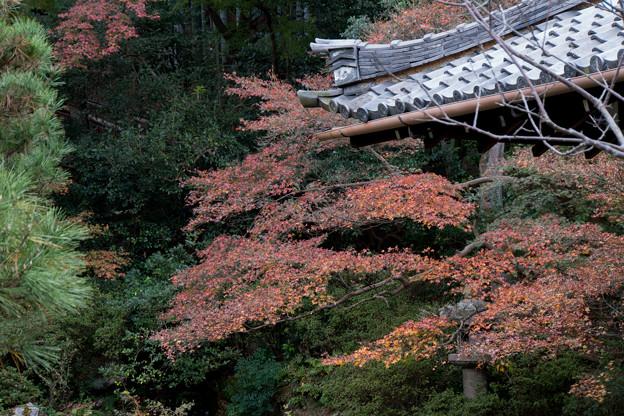 26京都の紅葉【青蓮院門跡】5
