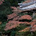 Photos: 26京都の紅葉【青蓮院門跡】5