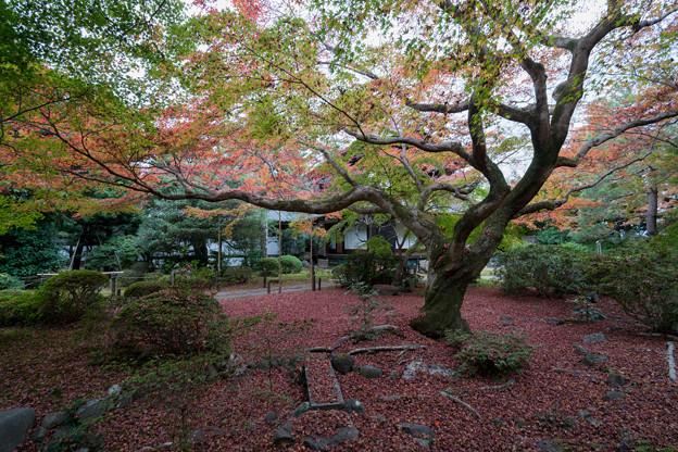 29京都の紅葉【青蓮院門跡】8
