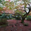 Photos: 29京都の紅葉【青蓮院門跡】8