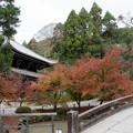 Photos: 36京都の紅葉【知恩院】6