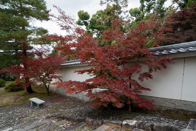 33京都の紅葉【知恩院】3