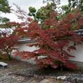 Photos: 33京都の紅葉【知恩院】3