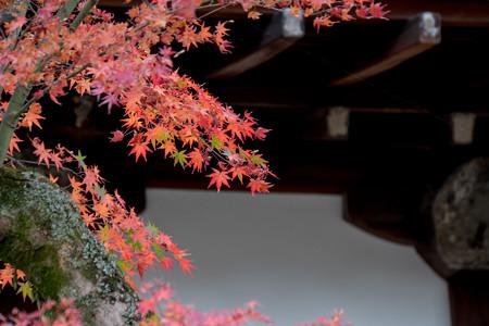 38京都の紅葉【知恩院】8