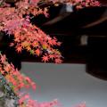 Photos: 38京都の紅葉【知恩院】8