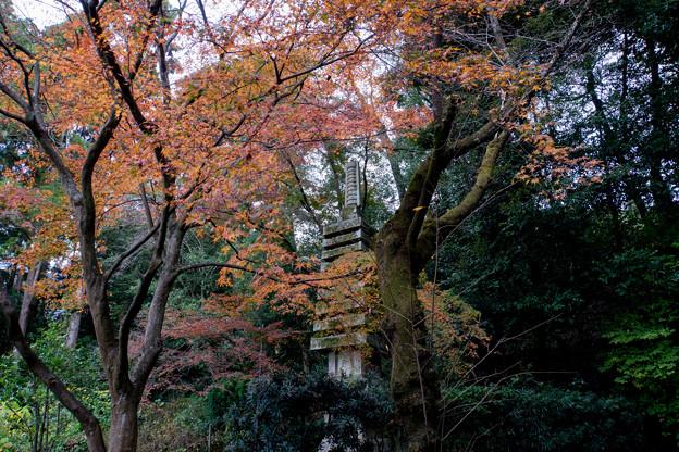 37京都の紅葉【知恩院】7