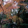 Photos: 37京都の紅葉【知恩院】7