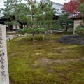 Photos: 41京都の紅葉【高台寺】3