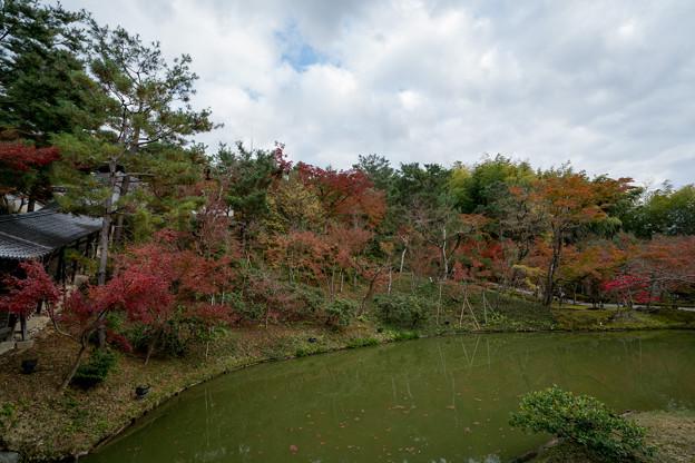 42京都の紅葉【高台寺】4