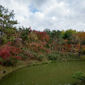 Photos: 42京都の紅葉【高台寺】4