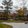 Photos: 43京都の紅葉【高台寺】5