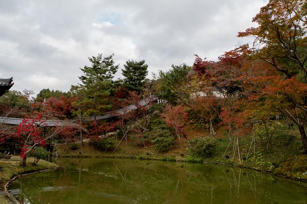 45京都の紅葉【高台寺】7