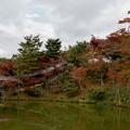 Photos: 45京都の紅葉【高台寺】7