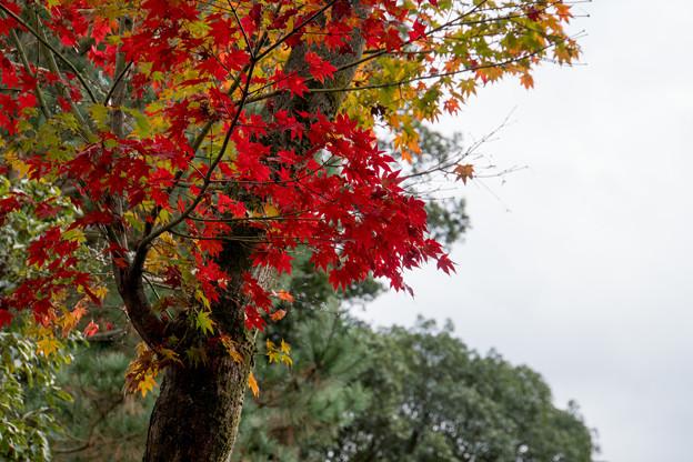 46京都の紅葉【高台寺】8