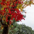 Photos: 46京都の紅葉【高台寺】8