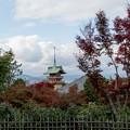 44京都の紅葉【高台寺】6