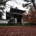 47京都の紅葉【東福寺】1