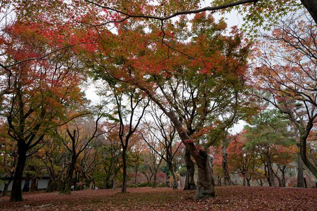 48京都の紅葉【東福寺】2