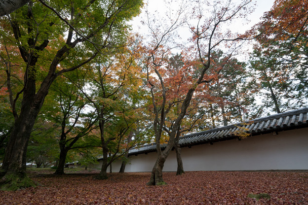 49京都の紅葉【東福寺】3