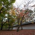 Photos: 49京都の紅葉【東福寺】3