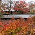 51京都の紅葉【東福寺】5