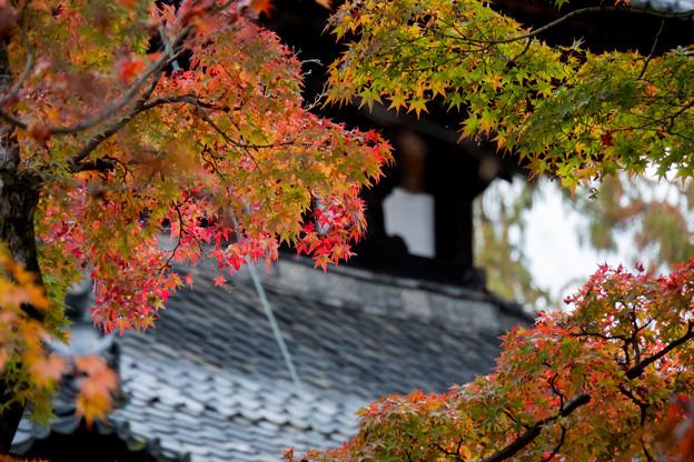 53京都の紅葉【東福寺】7