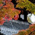 Photos: 53京都の紅葉【東福寺】7