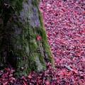 Photos: 54京都の紅葉【東福寺】8