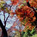 Photos: 08都心紅葉名所巡り【小石川後楽園:小廬山の紅葉】銀塩