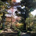 Photos: 12都心紅葉名所巡り【旧古河庭園:心字池周辺の紅葉】1